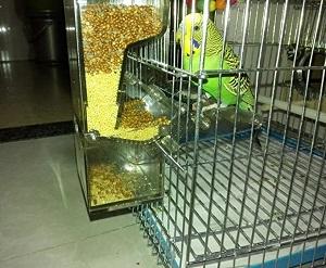 Comederos Automaticos para Pajaros en una jaula de periquito